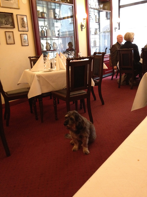 the dog at boettners