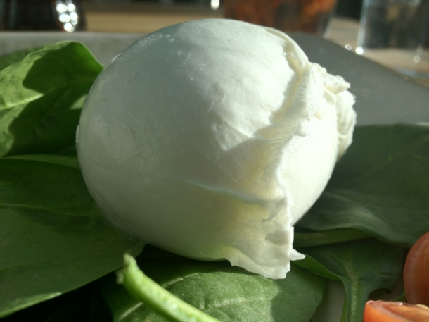 buffalo mozzarella at obika