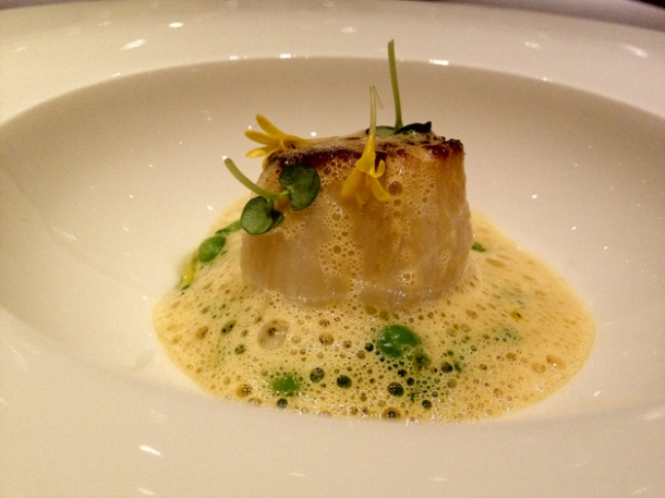 scallop with peas in saffron butter at saüc