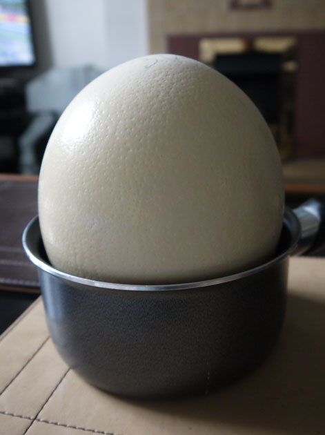 ostrich-egg-in-a-saucepan