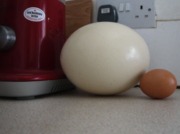 how does the poaching eggs recipe scale for different ...  Ostrich Egg Size Compared To Chicken Egg
