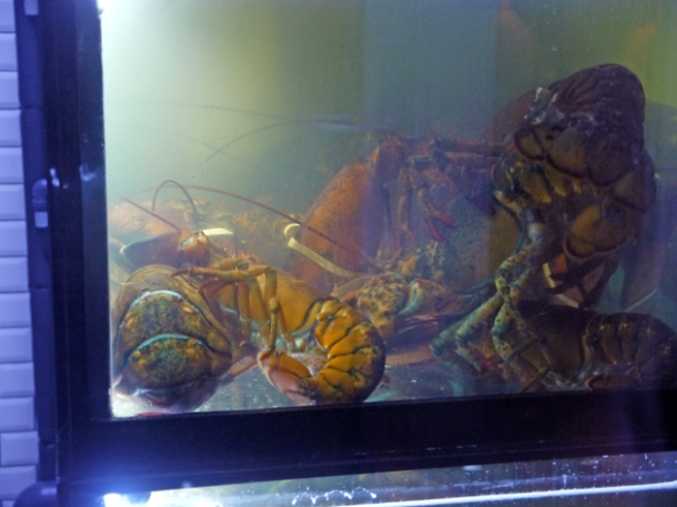 lobster tank at burger and lobster dean street