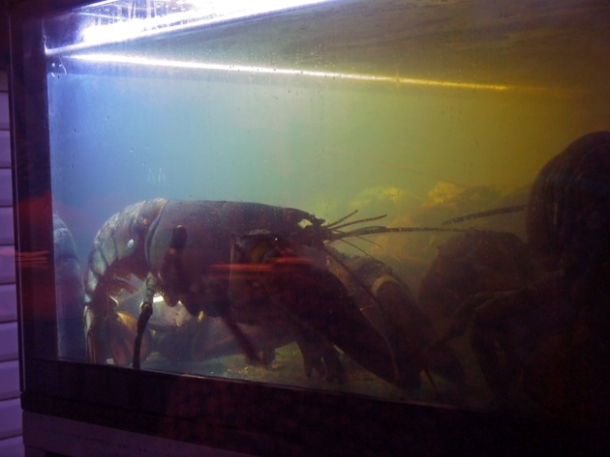 lobster tank at burger and lobster soho