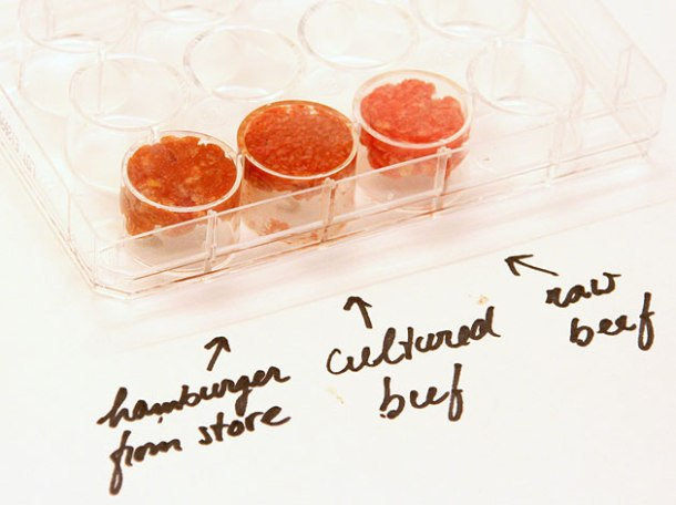 cultured beef grown in the lab compared to traditionally grown beef