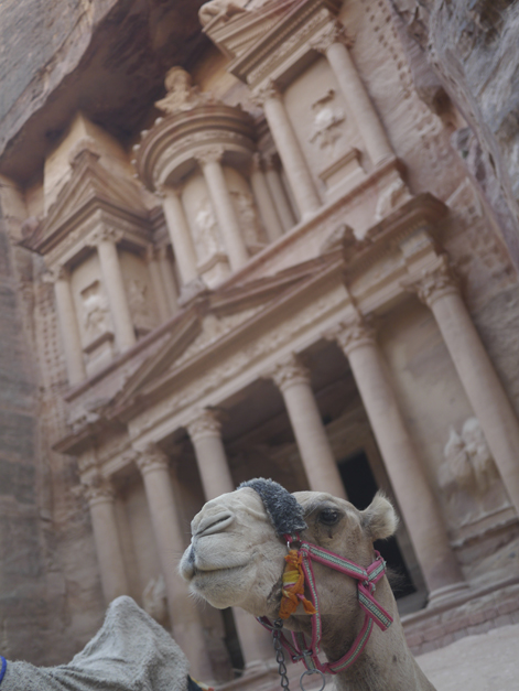 camel at petra treasury