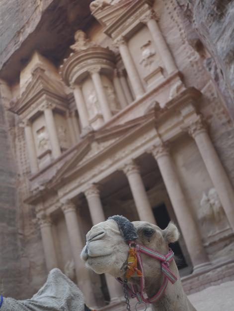 camel at petra treasury