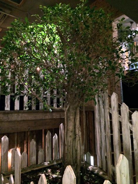 indoor tree at barnyard